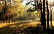 Участок рядом с лесом